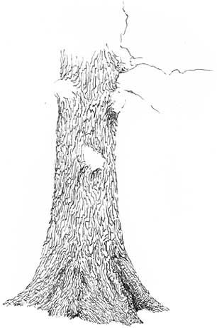 Learn to Draw an Oak Tree