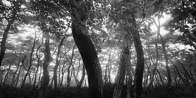 Bae Bien-U, Pine Tree