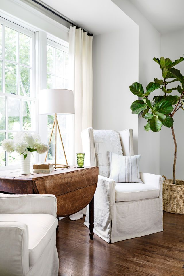 Fiddle leaf fig tree in living room