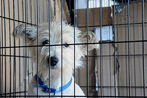 San Diego Says NO to Pet Store Puppies! #EndPuppyMills