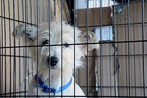 San Diego Says NO to Pet Store Puppies! #EndPuppyMills