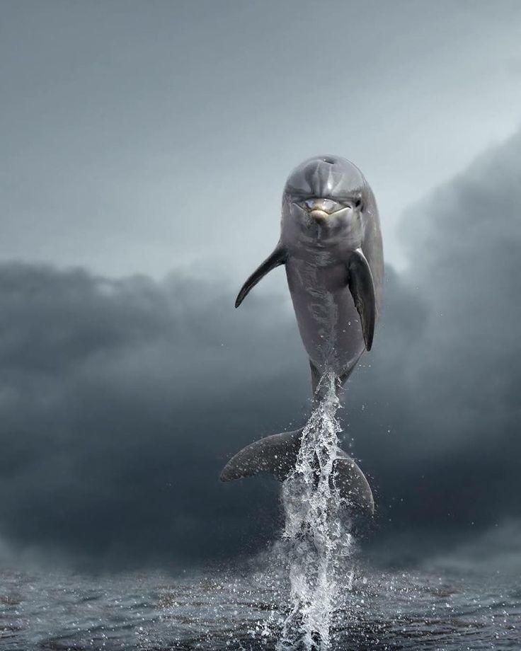 Sealife Wassertiere Ausgestopftes Tier Tiere Wild