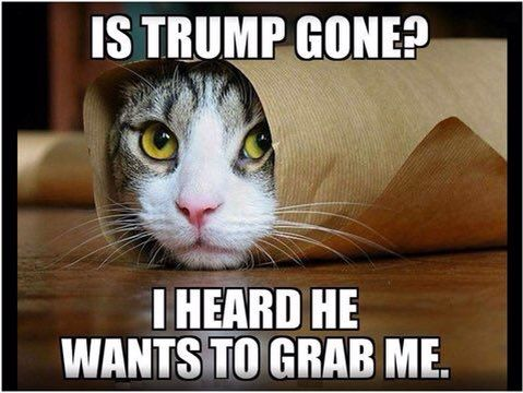 Trump looking pussy cat to grab lol😂😂