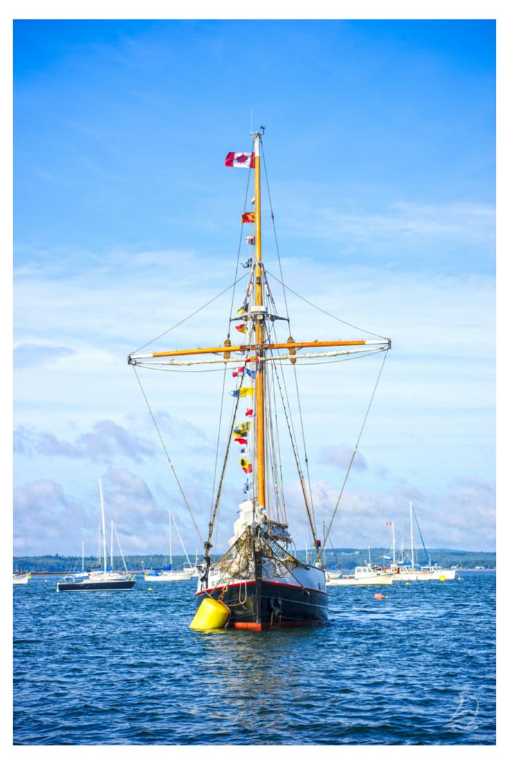 Ahoy, matey! See creatures large and small on a whale-watching trip in the Bay of Fundy, New Brunswick Canada. Book a tour: http://www.tourismnewbrunswick.ca/Products/Groups/WhaleWatching.aspx?utm_source=pinterest&utm_medium=owned&utm_campaign=tnb%20social