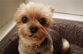 Have you ever had a beloved pet stolen from your home or yard? Learn of the joyful reunion between Hollywood actress Tricia O'Kelley and her Yorkshire Terrier on my Pet-Lebrity News blog: http://www.pet360.com/blog/post/pet-lebrity-news/hollywood-actress-deaf-dog-safely-returned-after-being-kidnapped-and-held-for-ransom/xyMZtbA1CkG0mrgLkMAAfg