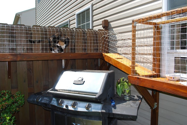 Backyard Enclosures For Cats :  Jewelry  Pinterest  Outdoor Cat Enclosure, Cat Enclosure and Cats