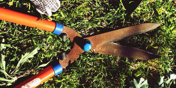 25 Best Ideas About Rusty Garden On Pinterest Rustic Gardening Tools Decorative Garden