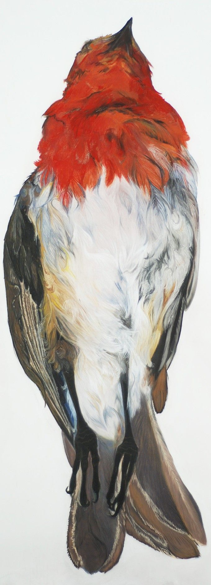 Roos Holleman – Fontanel