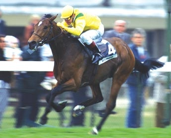 Helissio: 13 Starts, 8 Wins, 1 Places, 2 Shows Career Earnings: 2,008,467. Two time winner of Grand Prix de Saint Cloud. European Horse of the Year 1996: Dancer Bloodlines, Price, Grand Prize, Northern Dancer, Horse Racing, Career Earnings, 13 Starts, St.