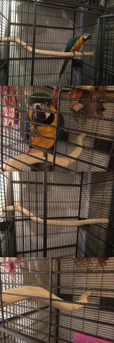 Perches 46291: 2 Of Manzanita Parrot Perch For Your 40 Bird Cage!!! Hot!!!! -> BUY IT NOW ONLY: $100 on eBay!