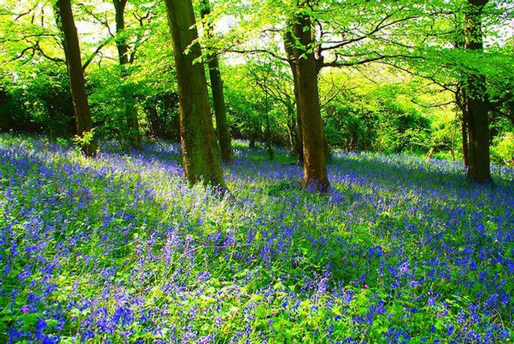 Bilde fra http://img.xcitefun.net/users/2011/04/240921,xcitefun-natures-best-gift-during-spring-season-6.jpg.