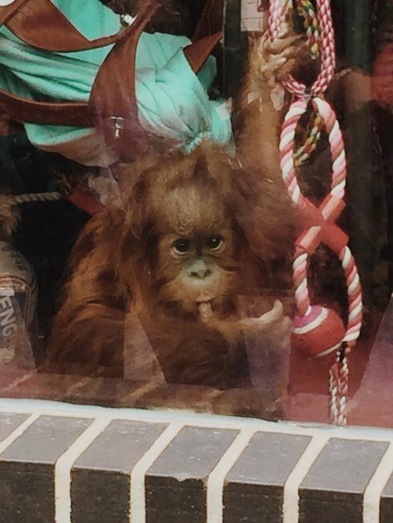 FULL CREDIT TO MONKEY WORLD - FIRST CLASS - Monkey World, Wareham Traveller Reviews - TripAdvisor