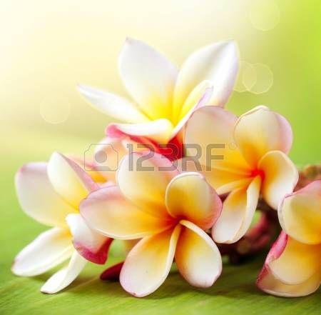 tropische bloemen - Google zoeken