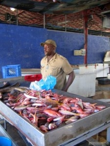 Très beau marché aux poissons de Fort de France - Martinique - Antilles Dès l'aube, en provenance des exploitations de l'île, un défilé de camions chargés de légumes, de fruits, de piments, de boissons, se dirige vers la grande halle. Dans le même temps, les pêcheurs débarquent leurs poissons au marché aux poissons de la Rivière Madame. La ville s'anime et se colore, ce qui lui donne tout son charme.