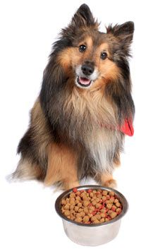 Food allergies in dogs can cause a large amount of skin redness, hair loss, pruritus (the sensation of itchiness), vomiting, and diarrhea. The good news is that it's very easy to treat this condition once it is diagnosed.