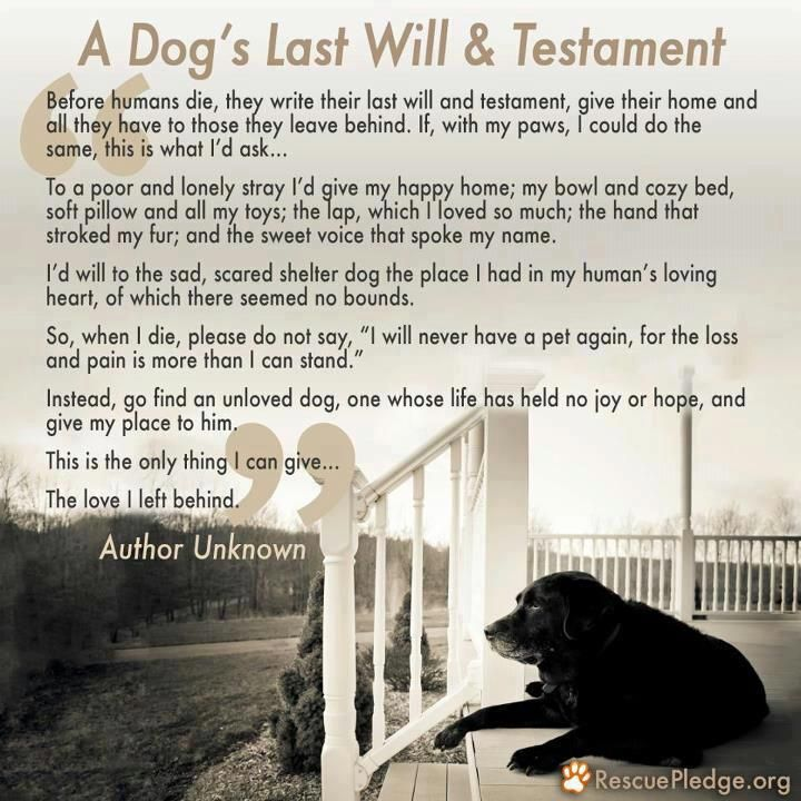 A dog's last will and testament.