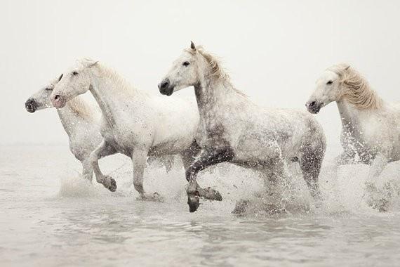 .: Irene Suchocki, Buckets Lists, Natural Photography, Camargu Hors, White Horses, France, Horses Photography, Wild Horses Running, Hors Photography
