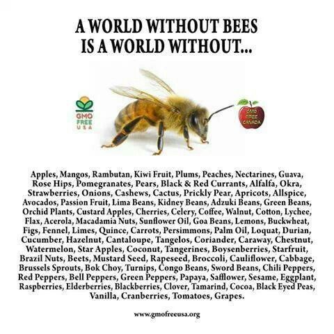 16 best images about Bee Facts on Pinterest | Trips ... - photo#39