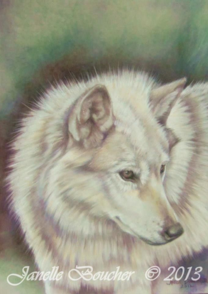 Wolf ~ Pastel on Velour , Thank you to Cindy Weitzel for the lovely reference photo