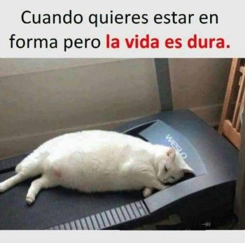 Frases Con Doble Sentido Chistosas Y Cortas Para Whatsapp Super Funny Memes Funny Food Memes Cat Memes