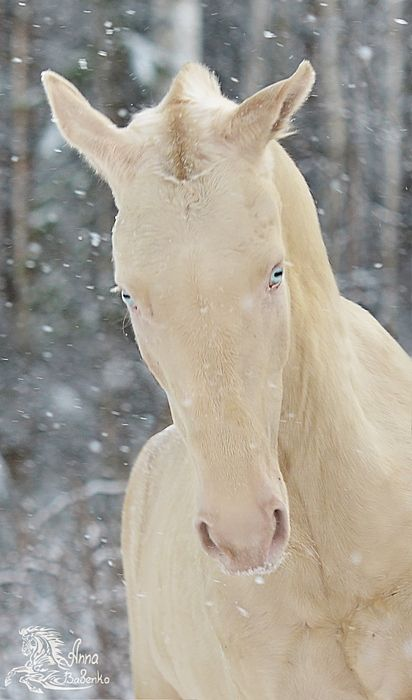 Most of the time, I don't notice that horse eyes are like goat eyes.  I thin…