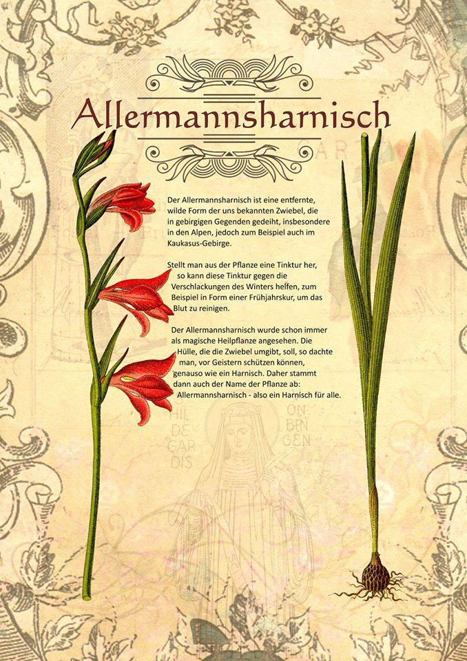 Allermannsharnisch  http://www.kraeuter-verzeichnis.de/