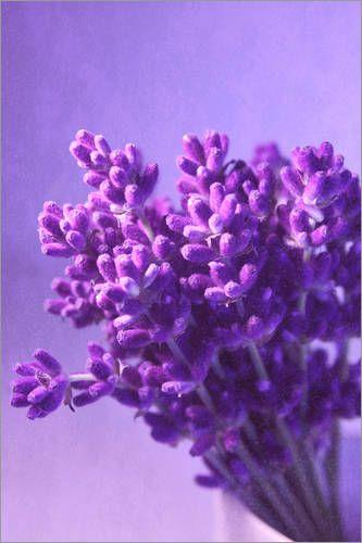 Der Frühling ist da – Zeit für Milchkaffee in der Sonne und leckeres Eis, am besten auf Balkonien! Deshalb auch die Zeit, den Balkon zu pimpen. Frische Blumen und Pflanzen müssen her! Aber welche? DailyArtDesign hat einige Tipps parat, wie Balkonien zum grünen Reich wird!