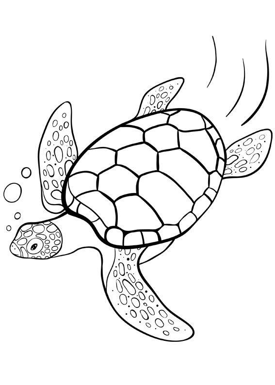 Морские черепахи картинки раскраски