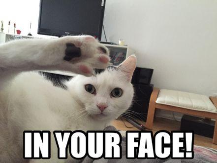 In your face! Karatecat! Katzen sind einfach unfassbar gelenkig