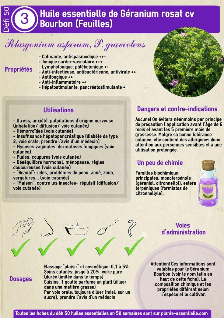Géranium Bourbon : propriétés et utilisation sans danger (Pelargonium graveolens, asperum cv Bourbon)