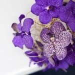 Purple orchids, flowers im using for the wedding