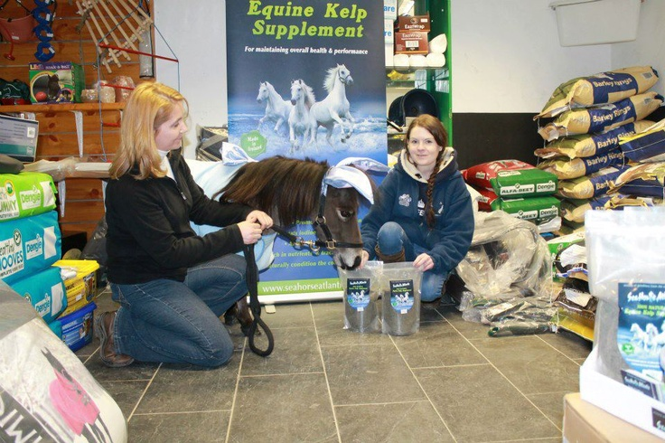 Doodle little tiny pony visits Seahorse Atlantic Animal supplement #horse #pony #supplement #healthy #pet