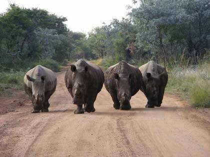 Celebrating Rhino Friday! Move over guys, here we come!