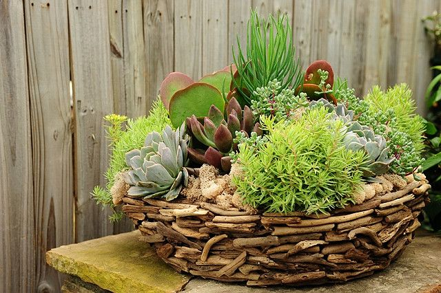 54 Best Images About Driftwood Ideas On Pinterest