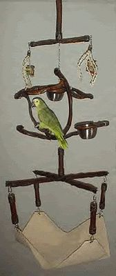 Inspirational Hanging Parrot Gym