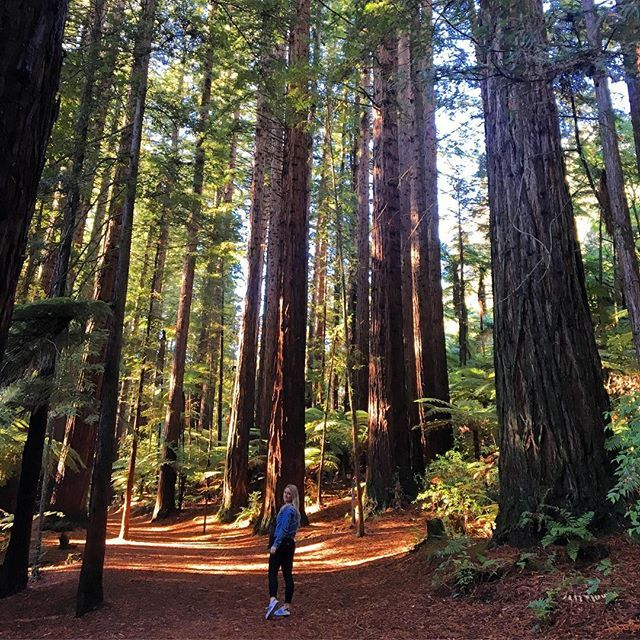 Lost amongst giants , Redwoods Forest is seriously impressive !! A must do for anyone in the Rotorua area or if you are driving through then it's a great place for a stretch break ! NZ