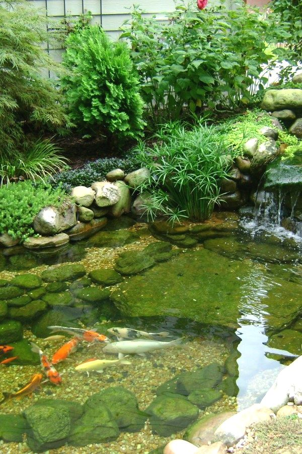 50 Awesome Koi Pond Plans You Can Create Yourself To Accent Your Backyard   Koi  Ponds Design No. 12631   #koi_pond #garden_pond #landscaping - 50 Awesome Koi Pond Plans You Can Create Yourself To Accent Your
