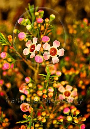 Warm light  framcaphotography.com