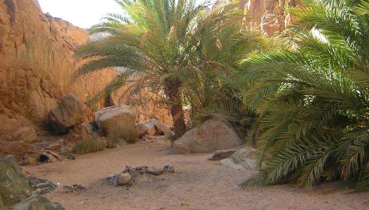 Vakakantie Dahab Egypte - Wadi Ghonai Oase