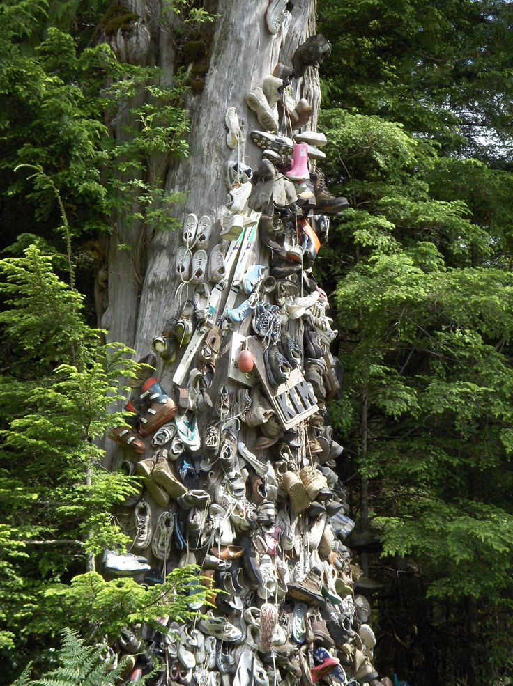 """""""Hope For Lost Soles"""" Shoe Tree off the highway before Prince Rupert, BC, Canada. I hope to return to nail a pair of my own soles to it."""