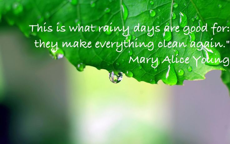 """""""That's what rainy days are good for: they make everything clean again.""""  Mary Alice young  Desperate housewives"""