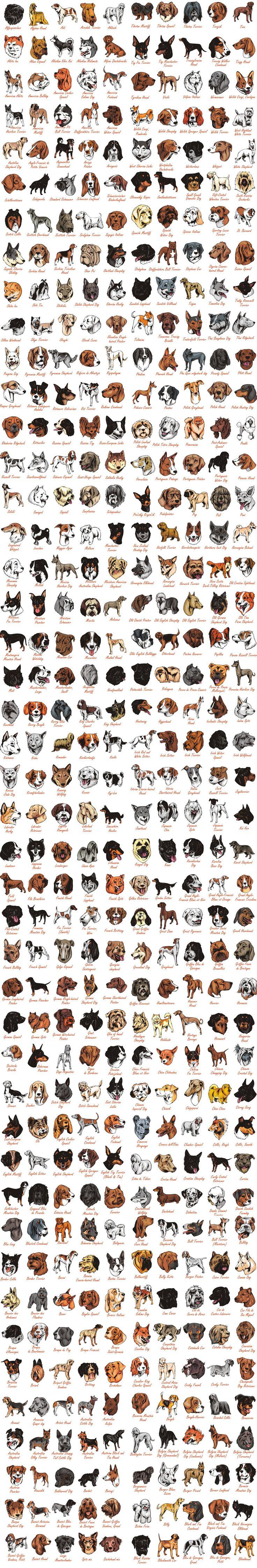 All dog breeds - Download  a set of 1350+ Dog breeds in vector format
