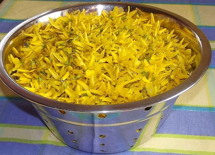 Forsycja znalazła się w zielarstwie dzięki zawartości flawonoidów, lignanów i saponin. Te niepozorne żółte kwiatki są rekordzistami co do zawartości rutyny, bo zawierają jej aż 1 %.