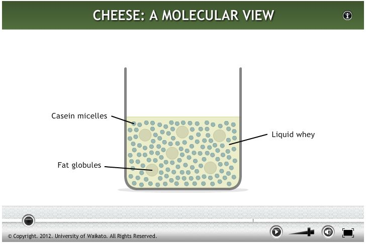 This animation shows how the molecular structure of milk changes at various stages of cheese making.