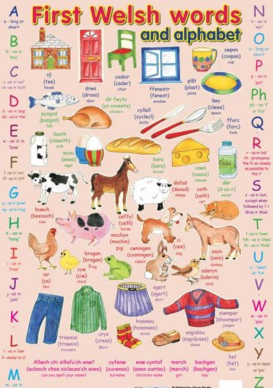First Welsh Words Educational Poster Chart : Educational Posters, Anatomy Posters, Preschool, School Charts, Software, College / University Study Guides, Teacher & Student Resources, Science, History, Geography, Nature, Environment, Pollution, Early Learning Posters