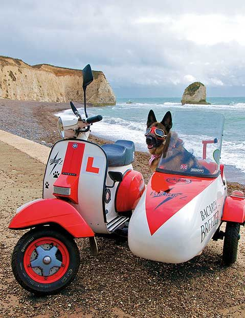 Breez, an Alsatian, in his customised sidecar at Freshwater Bay on the Isle of Wight