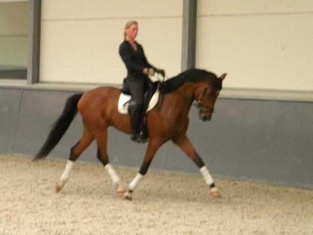 A vendre Cheval de dressage aux 3 allures exceptionnelles (il vole littéralement) http://www.equirodi.be/annonces/cheval-a-vendre/cheval-de-dressage-exceptionnel-a-vendre-160003.htm