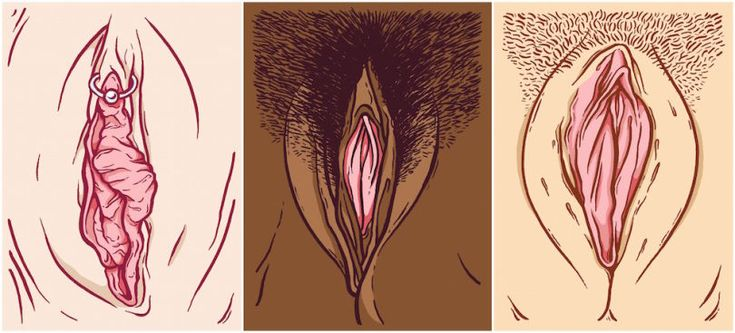 (Illustrations: Meredith White)