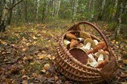 Polévka z čerstvých hub je pokrmem, který k podzimu jednoduše patří.