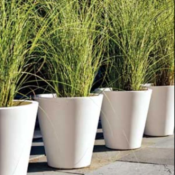 Grasses are great for windy balconies!!